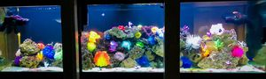 125g Complete Saltwater Tank for Sale in Lakeland, FL