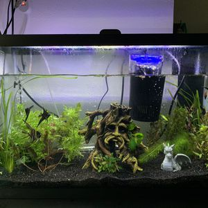 29 Gallon Aquarium Setup for Sale in Tacoma, WA