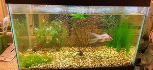 Fish Tank for Sale in Orange, CA