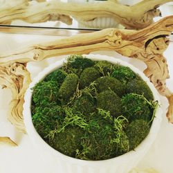 Moss Bowl for Sale in Hayward,  CA