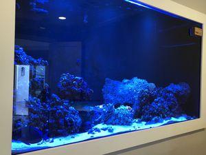 400 gallon custom salt water fish tank-no fish or coral for Sale in Carlsbad, CA