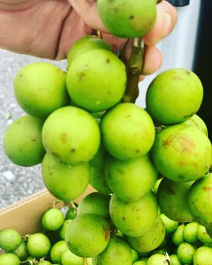 Quenepas Gueneps Mamon Mamoncillo for Sale in Fort Myers, FL