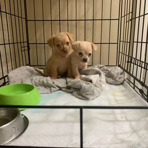 Puppy Cage Or Kennel for Sale in Commerce, CA