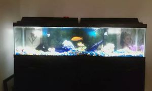 Fish tank and black stand for Sale in Clearwater, FL
