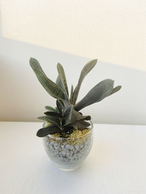 Small Succulent Plant - including pot, easy to treat! for Sale in New York, NY