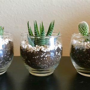 Cactus / Succulent for Sale in Los Angeles, CA