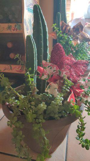 Cacti, succulent, garden, plant for Sale in Phoenix, AZ