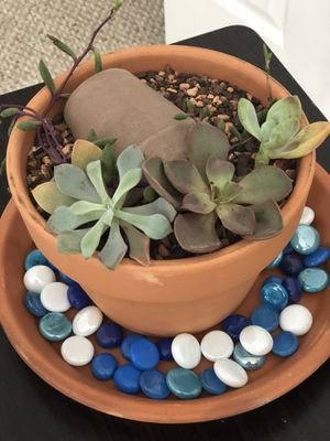 Succulents plants for Sale in Severn, MD