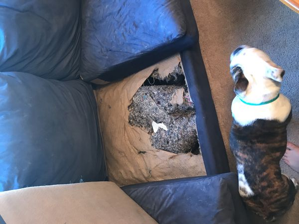 Used couch (FREE) (must pick up)