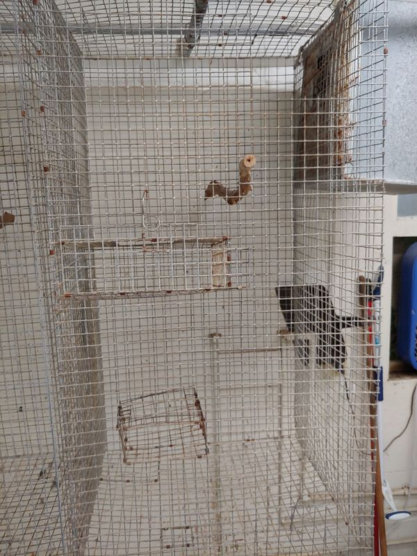 Wire cages 4 x 2 x2 ft galvanized
