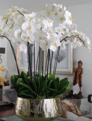 Orchids of the best quality and very long duration for Sale in Boca Raton, FL