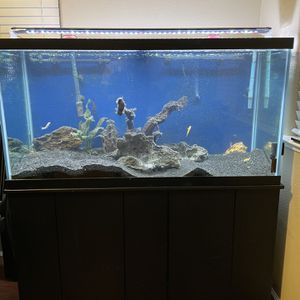 Freshwater Fish Tank for Sale in Woodland, CA