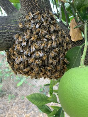 ATTN: BEE KEEPERS for Sale in Corona, CA