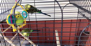 Birds Cage for Sale in Detroit, MI
