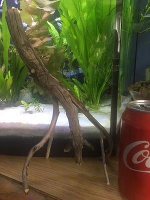 Aquarium manzanita driftwood for Sale in Chelsea, MA
