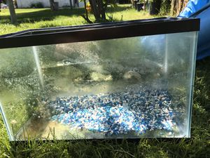 Fish tank 10 gallons for Sale in Ceres, CA