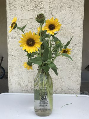 Fresh Sunflower Arrangement for Sale in Tracy, CA