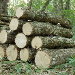 FREE firewood Logs, You Cut And Haul. Hardwoods for Sale in Cranbury Township, NJ