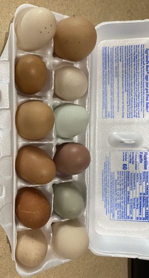 Fresh organic chicken eggs for hatching. for Sale in Loxahatchee, FL