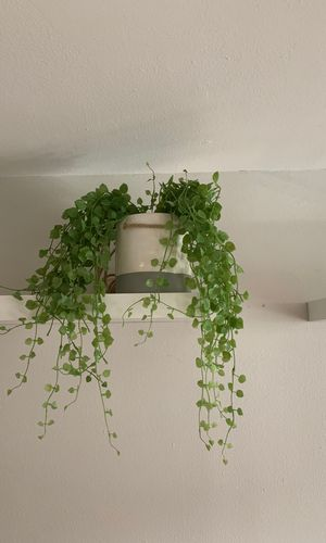 Fake indoor shelf plant with pot for Sale in New York, NY