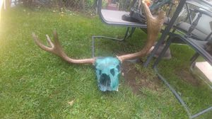 Skull and antlers for Sale in Newport, WA