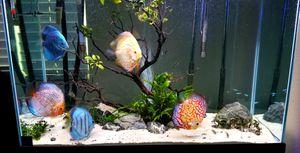 Aquarium 50 gallon Visio for Sale in Ontario, CA