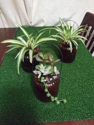 Plantas y succulents en macetitas pequeños de vidrio $4Each for Sale in Bell, CA