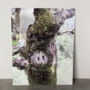 Tree & Moss Aluminum Print for Sale in Westminster, CO