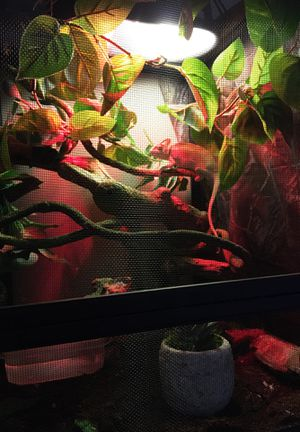 Chameleon Cage for Sale in Lexington, KY