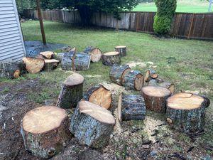 Free firewood (Spruce) for Sale in Kirkland, WA