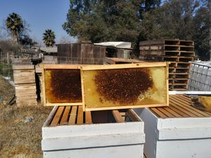 Bee boxes for sale for Sale in Dinuba, CA