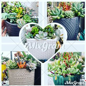 Beautiful succulent arrangements ready for you and your love ones to enjoy! We're also taking custom orders! for Sale in Torrance, CA