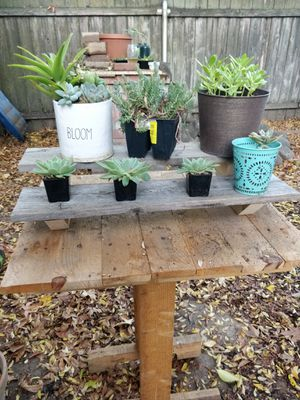 🌱🌱Plant shelf🌱🌱 for Sale in Citrus Heights, CA