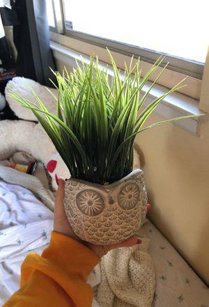 FAKE owl succulent plant for Sale in Manteca, CA