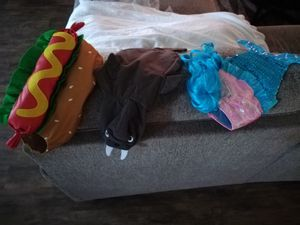 Pet costumes for Sale in Haines City, FL