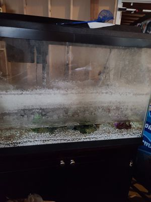 30 gallon fish tank with stand for Sale in O'Fallon, MO