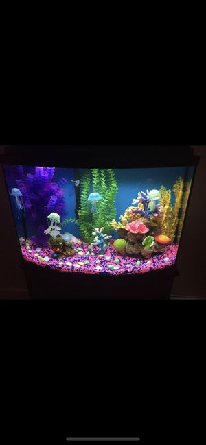 Pecera/ Aquarium with professional filter 35gal for Sale in TWN N CNTRY, FL