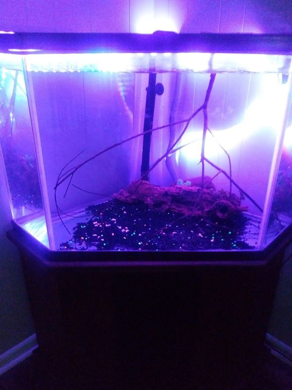 Great Aquarium,stand,two filters and decorations.