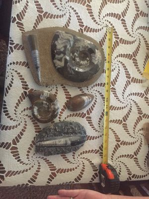 Fossils for Sale in Apache Junction, AZ