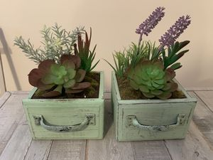 2 potted succulent plants for Sale in Willow Grove, PA