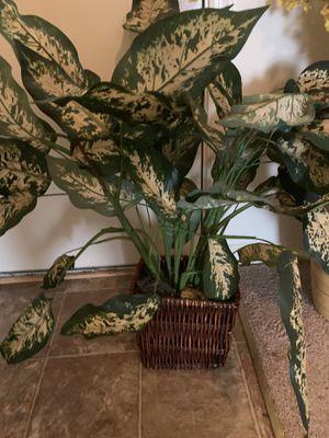 Flower arrangement Vases for Sale in Newport News, VA