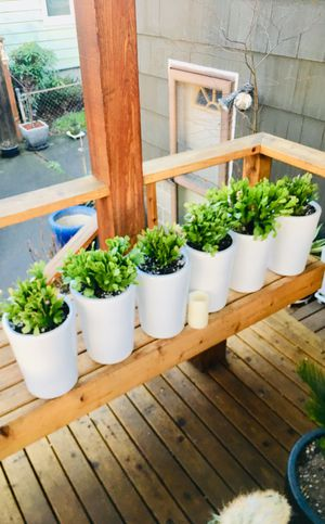 Price is for each—Live indoor Christmas cactus cacti house plant in a ceramic planter flower pot—firm price for Sale in Seattle, WA