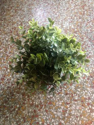 Fake IKEA plant for Sale in Hollywood, FL