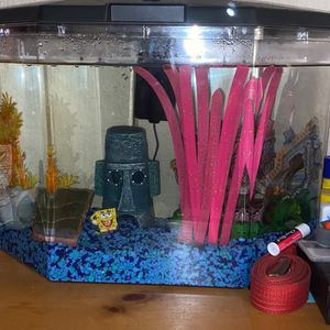 Fish Tank for Sale in Shingle Springs, CA