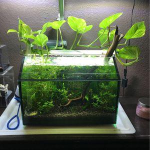 Fish Tank Aquarium for Sale in San Bernardino, CA