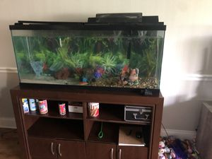 Fish tank 55 gal with stand for Sale in Oakland Park, FL