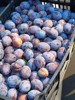 ORGANICALLY GROWN PLUMS for Sale in Vancouver, WA