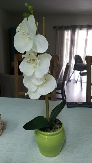 Plant accessory for Sale in Miami, FL