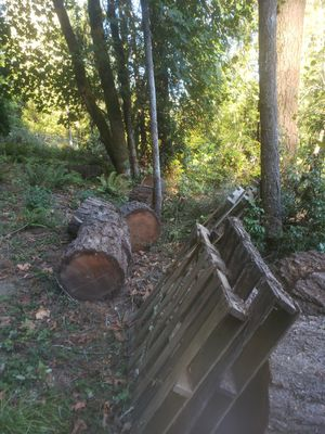 Seasoned Firewood Cut Rounds for Sale in Boring, OR