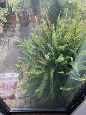 Plants and decorations for Sale in Sterling Heights, MI